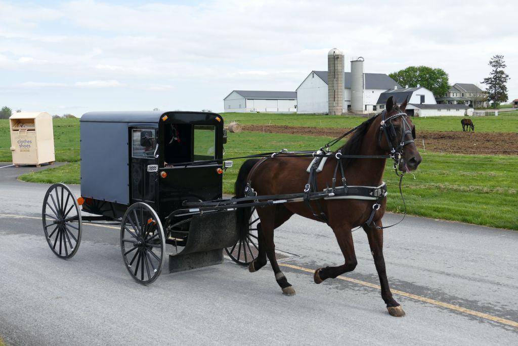 Amish Kutsche 3