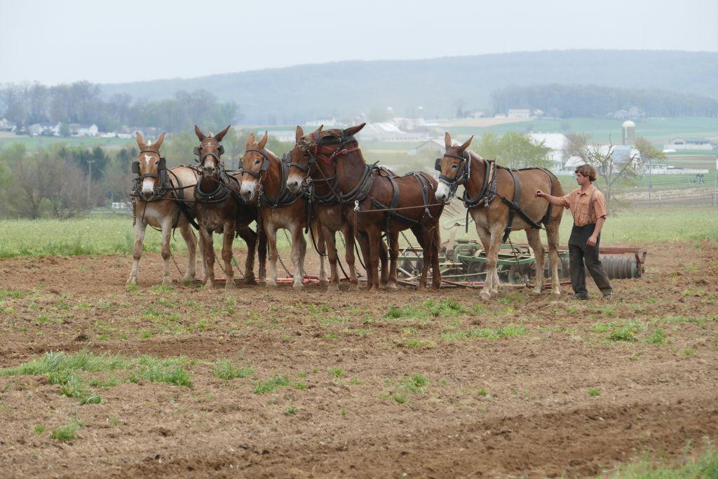 Amish mit Pferden am Arbeiten 1
