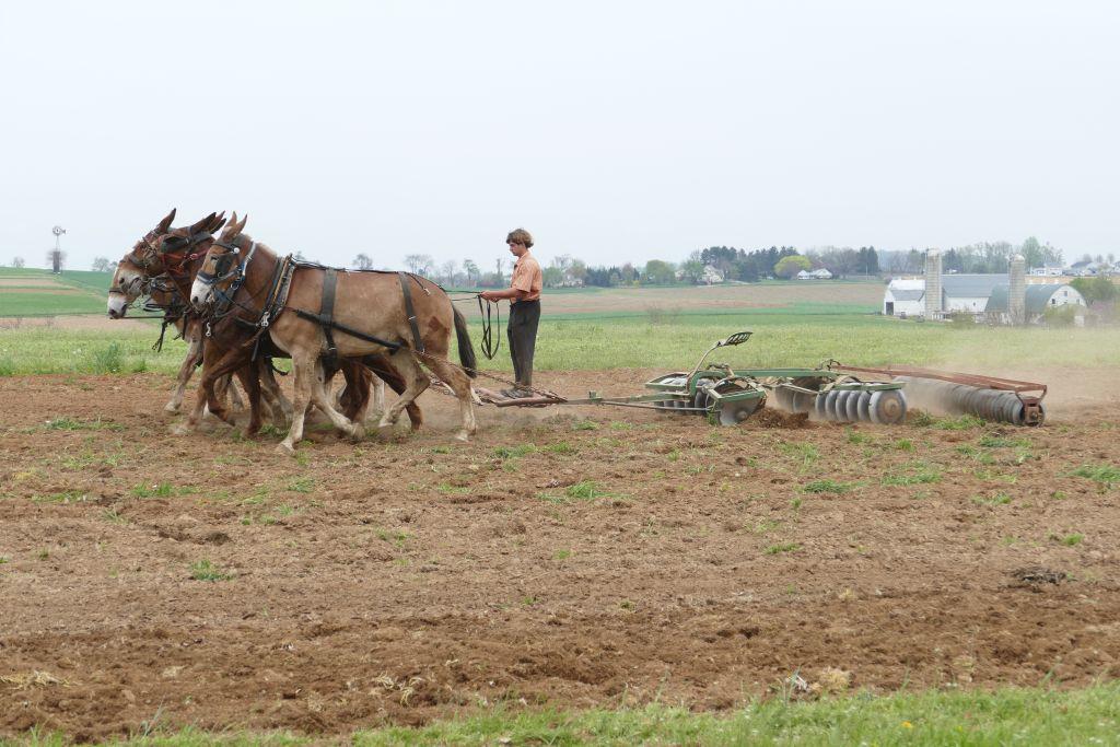 Amish mit Pferden am Arbeiten 3