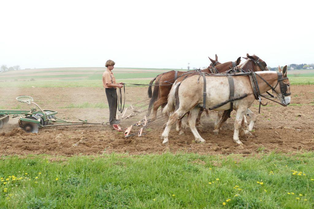 Amish mit Pferden am Arbeiten 4