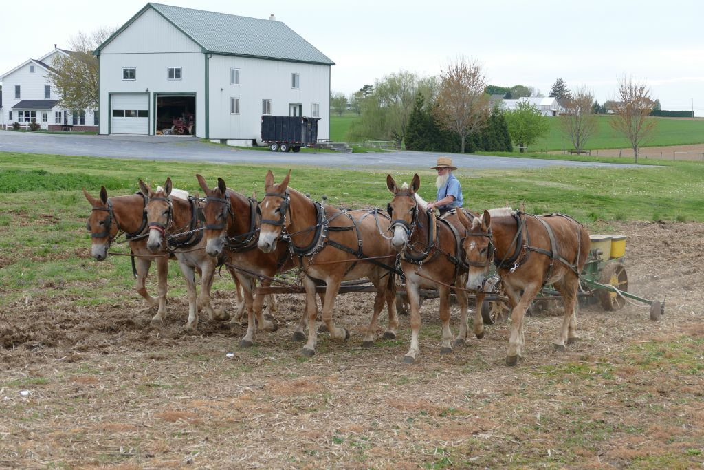 Amish mit Pferden am Arbeiten 5