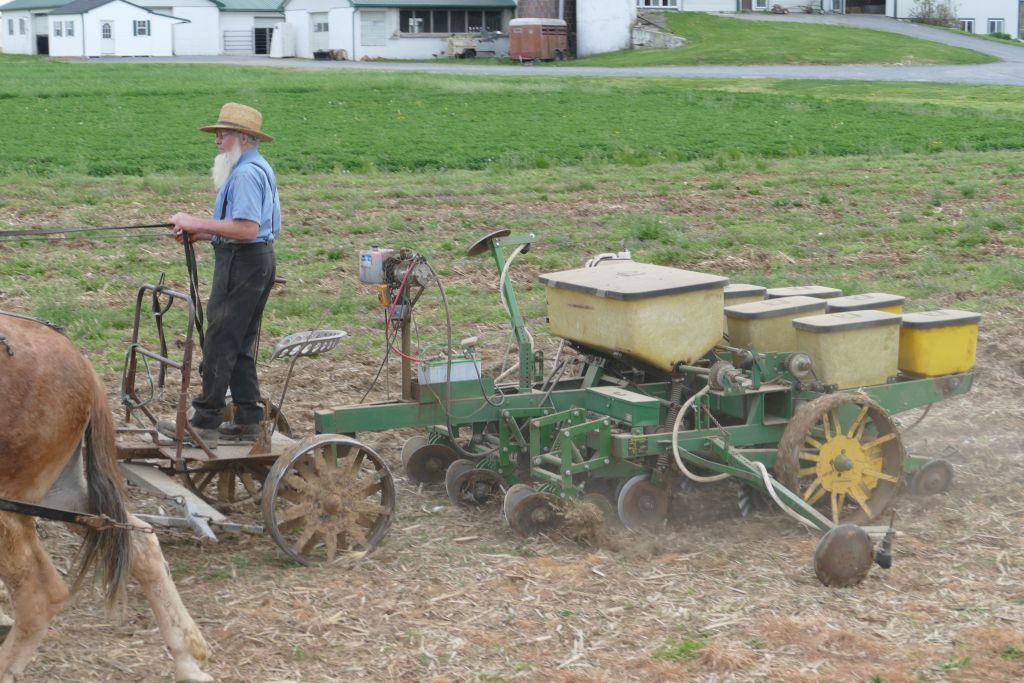 Amish mit Pferden am Arbeiten 6