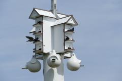 Vogel Mehrfamilienhaus 1