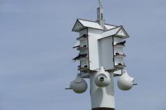 Vogel Mehrfamilienhaus 2