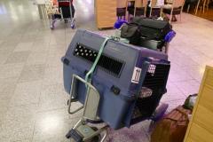 Flugbox und unser Gepäck