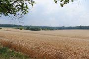 Kornkammer Ostdeutschland