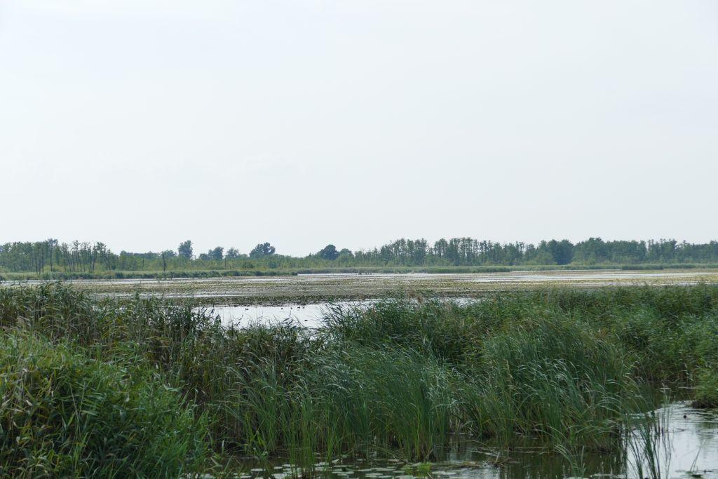 Naturschutzgebiet Druznosee