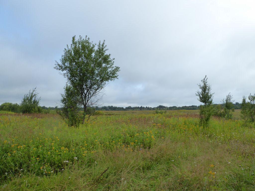 Landschaft nach Gusev