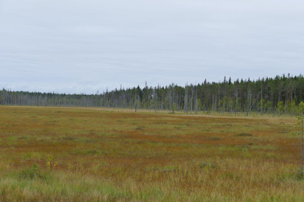 viel Sumpflandschaft mit angrenzenden Wäldern