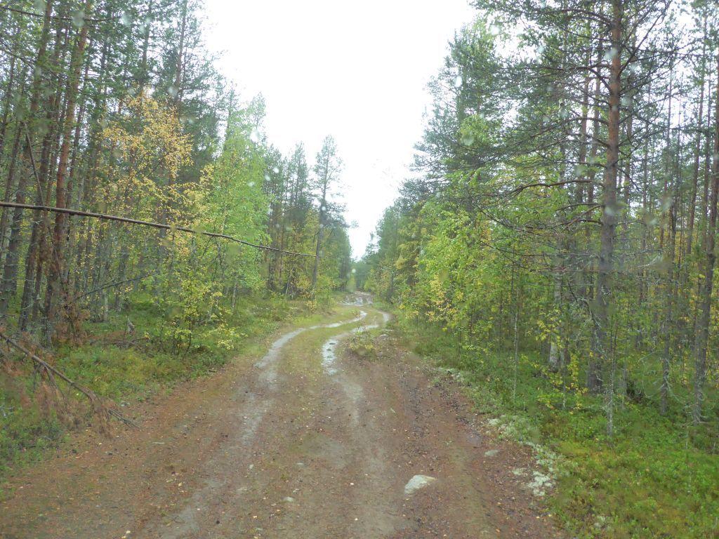 Piste schlägelt sich durch den Wald