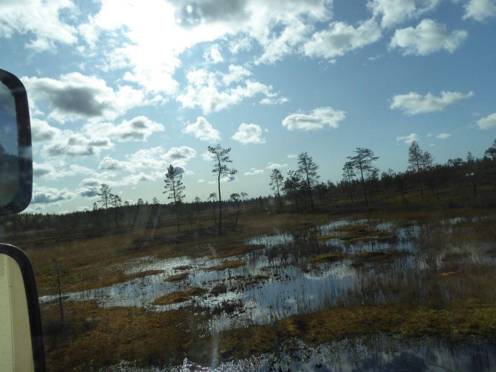 durch Sumpfgebiet